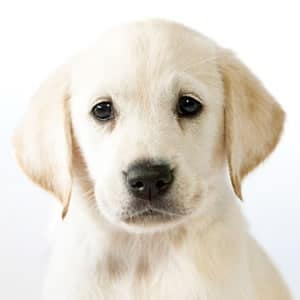 Sponsor a Puppy Eve