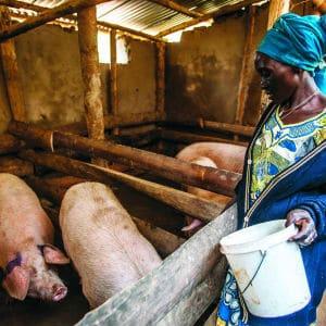 Oxfam Pig