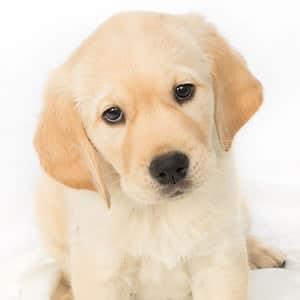 Sponsor a Puppy Poppy
