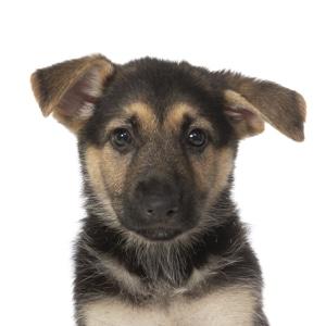 Sponsor A Puppy Cookie