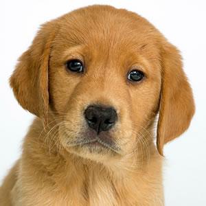 Sponsor a Puppy Fargo