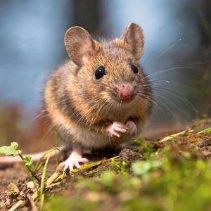 Help protect UK wildlife