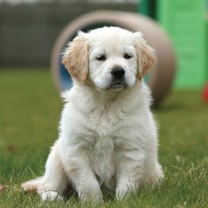 Sponsor a Puppy - Freya