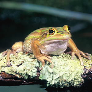 Help To Save Amphibians