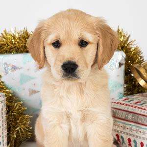 Sponsor A Puppy Joy
