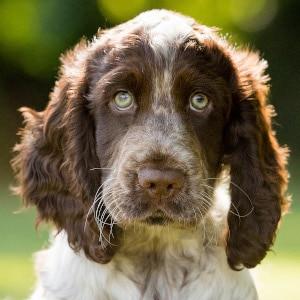 Sponsor A Puppy Luca
