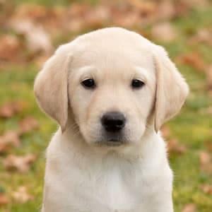 Sponsor a Puppy Molly
