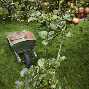 Restoring Orchards