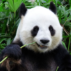 Save China's Forests