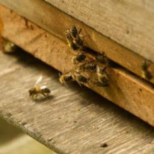 present aid beehive hpg