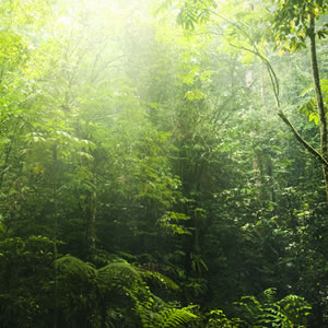 Buy An Acre Of Rainforest