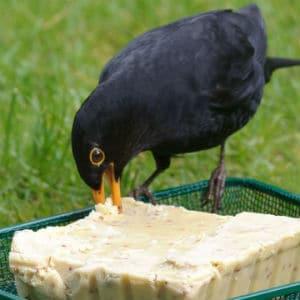 rspb square bird cakes