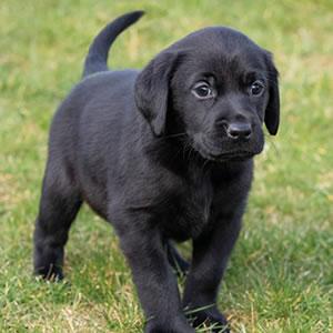 Sponsor A Puppy Skye