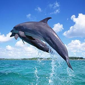 www dolphin