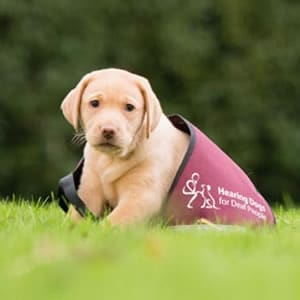 Sponsor a hearing dog called Zara