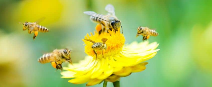 WWF Worried About The Decline Of Bee Populations In The UK