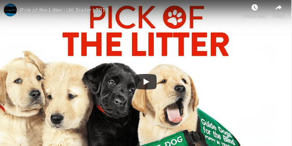 Guide Dogs Documentary Long On Cuteness