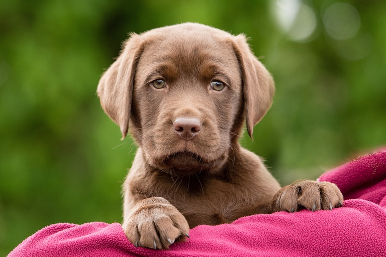 Sponsor a Puppy Elton