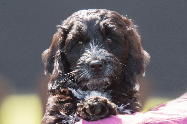 Sponsor A Puppy Feather