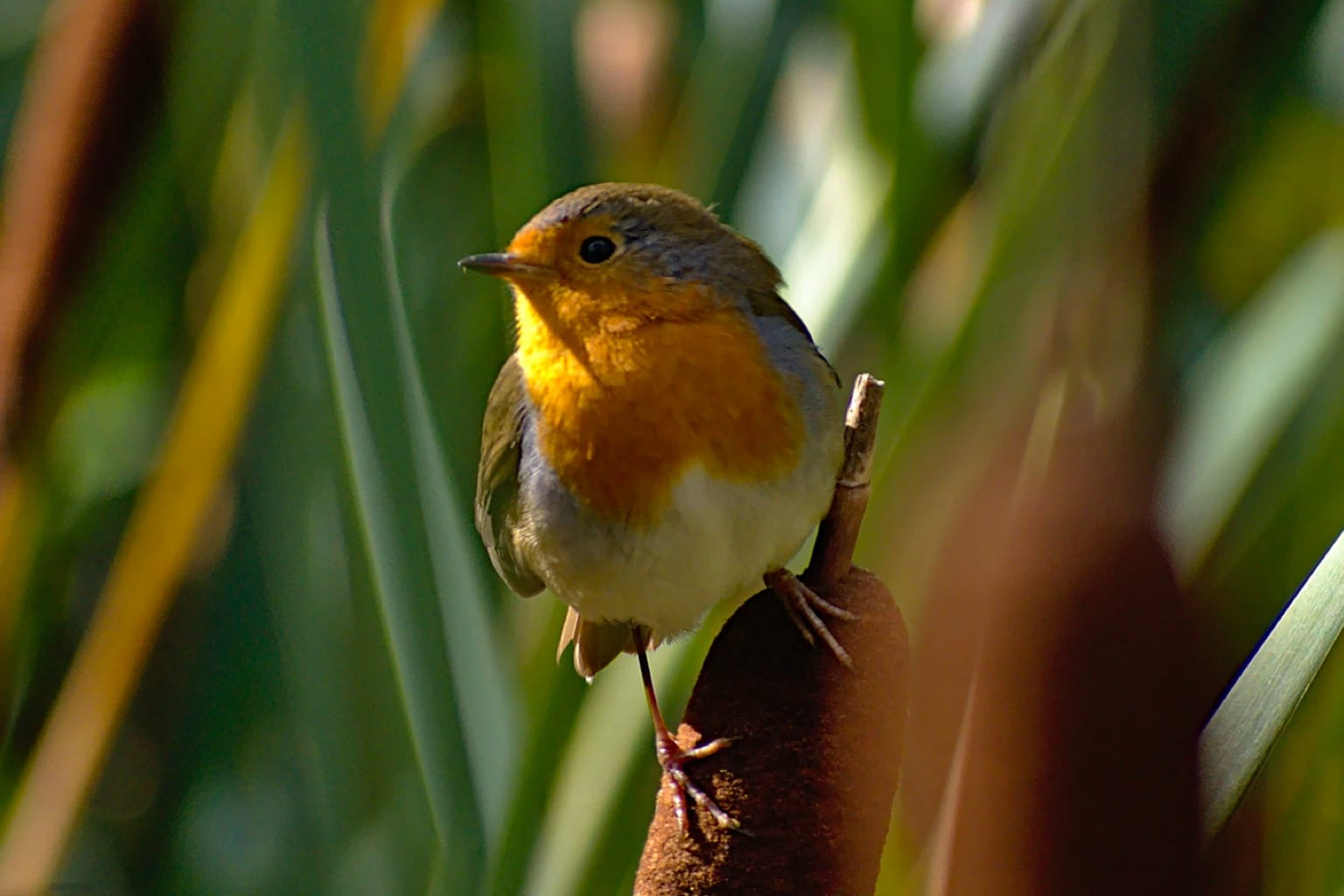 Help RSPB with a charity gift