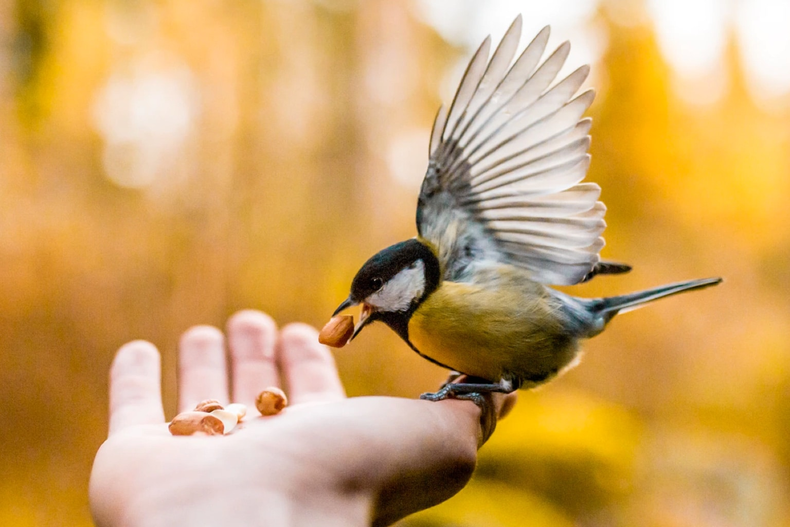 Charity Gifts from RSPB